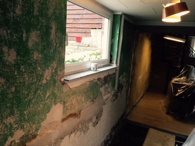 Skimmelsvamp i kælder