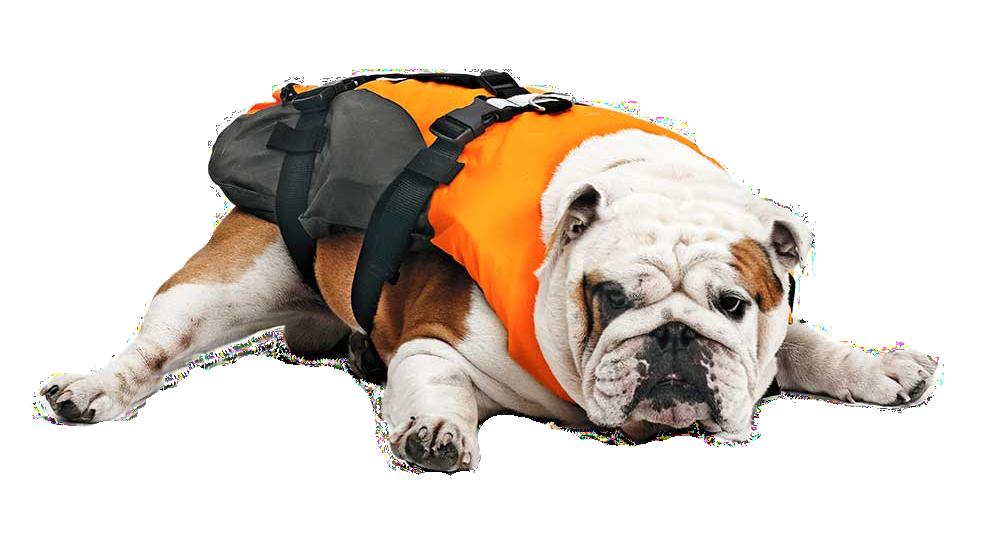 logo hund