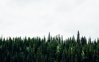 Vil du være med til at passe på miljøet? Drytechs løsning er skånsom mod naturen.